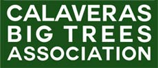 Calaveras Big Trees Association Mobile Logo
