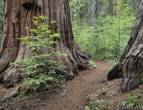 Calaveras Big Trees Welcomes All Visitors