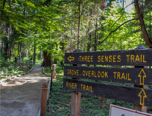 Reviving the Three Senses Trail at Calaveras Big Trees State Park