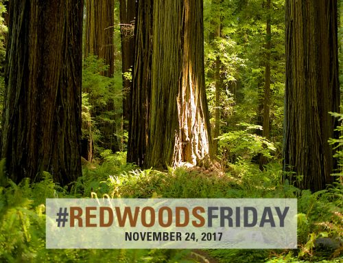 Redwoods Friday