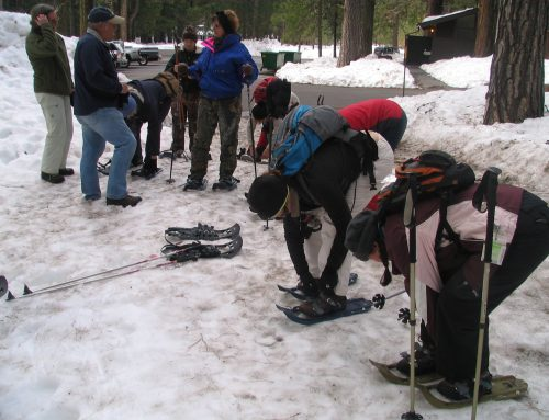 Winter Activities in the Park