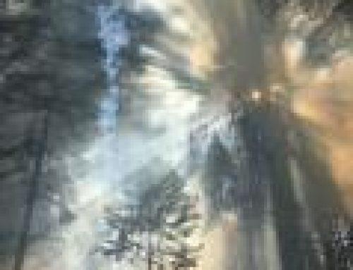 Prescribed Burn is over at Calaveras Big Trees