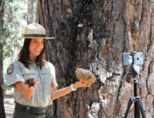 Digital Field Trips to Giant Sequoias